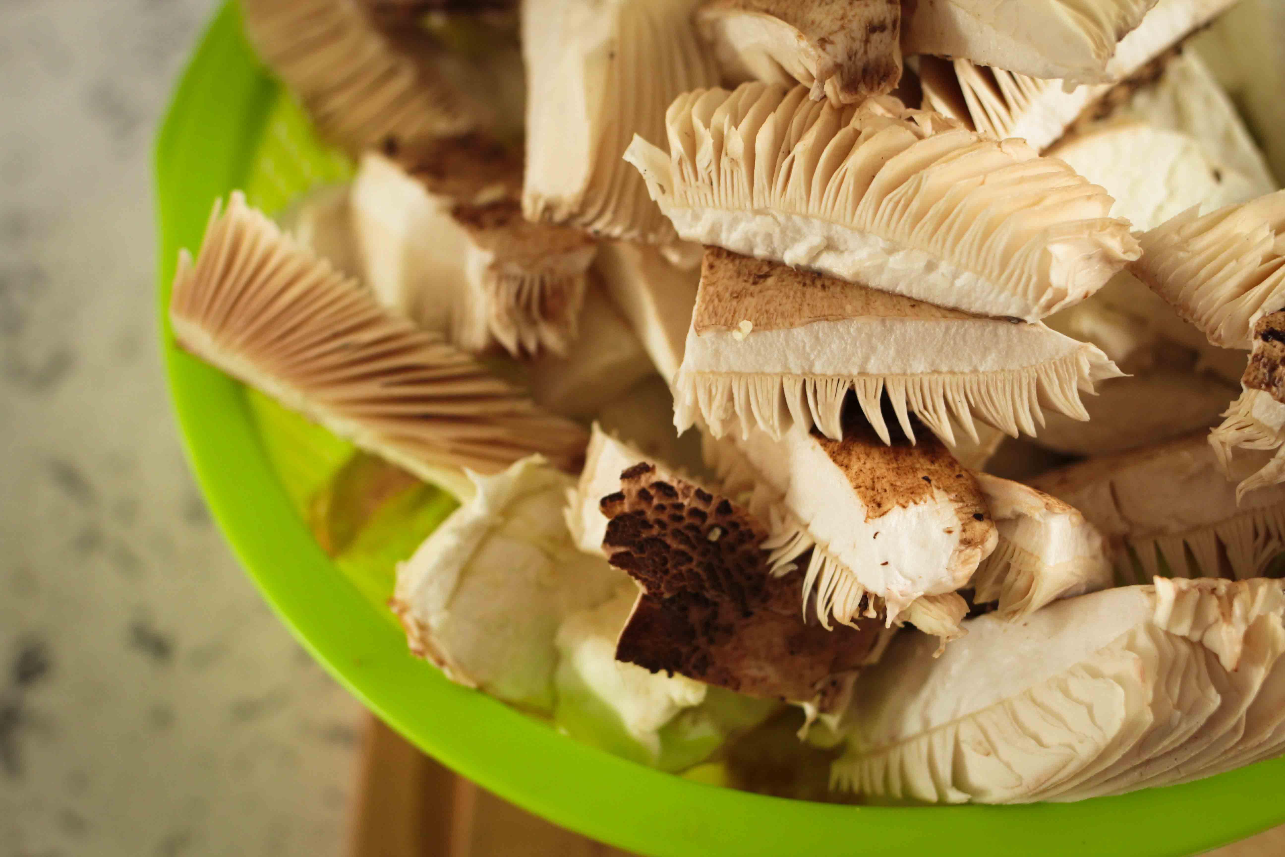 claudialeclercq-edible mushrooms-champignons comestibles_-13
