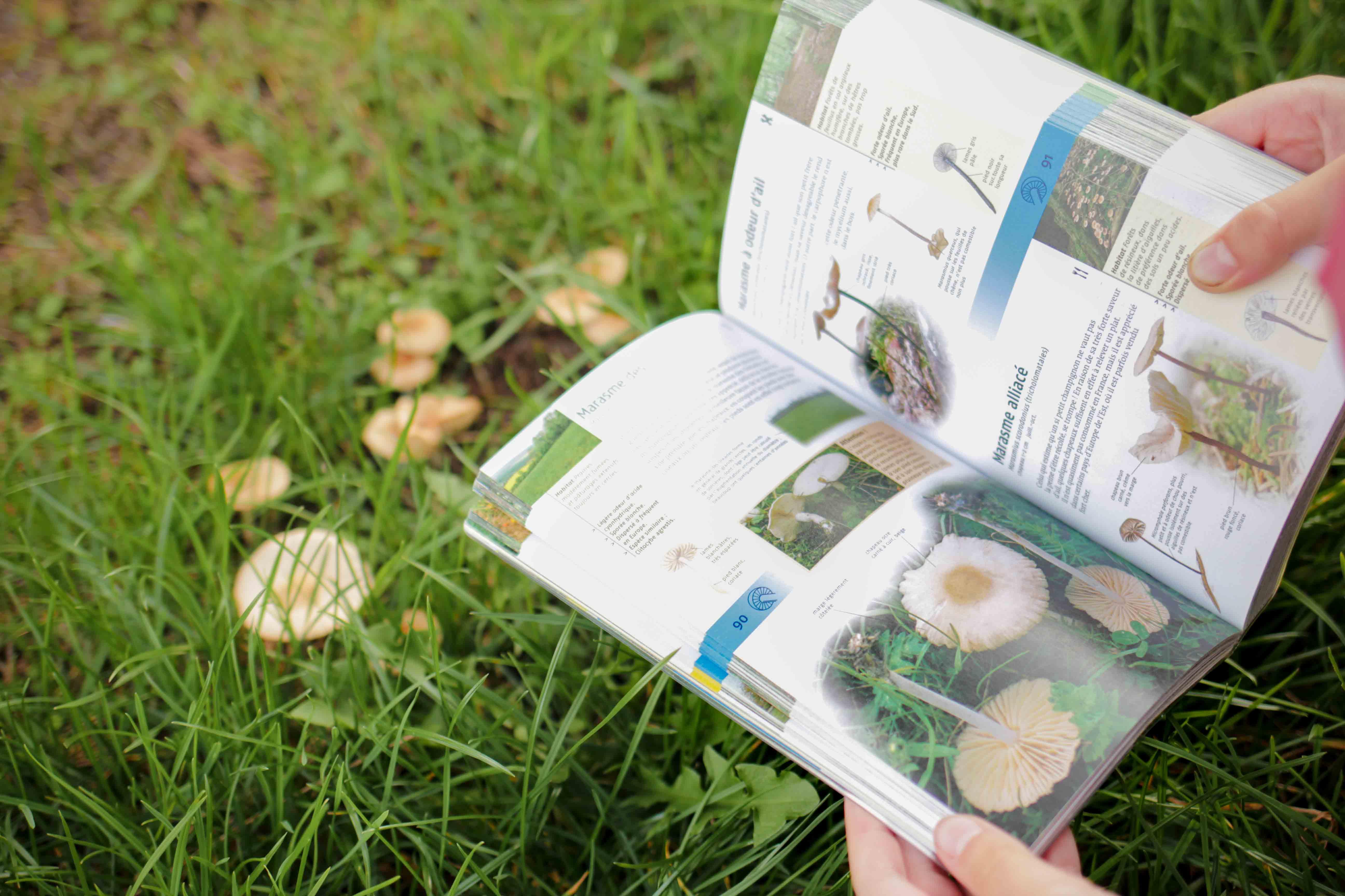 claudialeclercq-edible mushrooms-champignons comestibles_-15